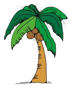 Coconut Tree Lesson for Kids: Facts & Uses - Video